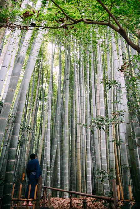 http://bettyhuang.net/files/gimgs/36_kamakura-japan-bamboo-forest-0479.jpg