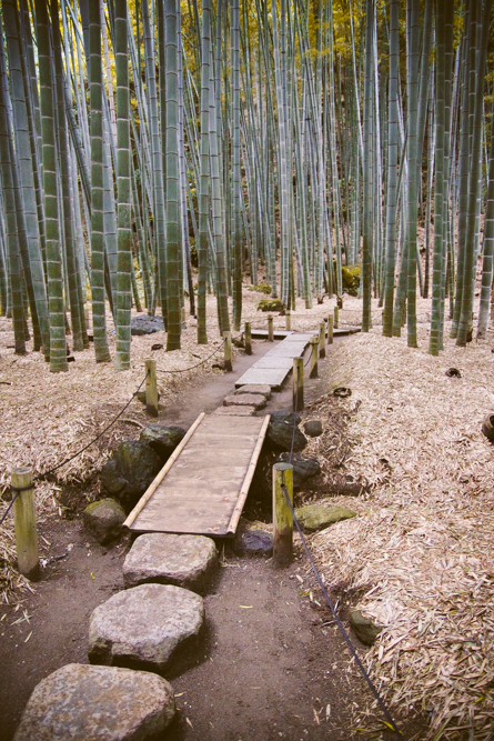http://bettyhuang.net/files/gimgs/36_kamakura-japan-bamboo-forest-0490.jpg